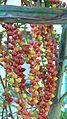 Please identify the palm tree species (348627520).jpg