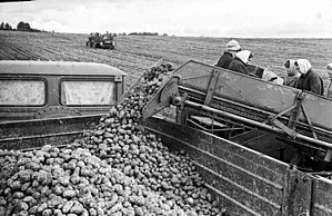 Food industry of Russia - Potato production in Russia, 1979