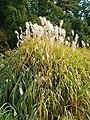 Poltava Botanical garden (23).jpg