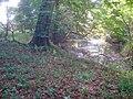 Pond in Fox Covert - geograph.org.uk - 1478897.jpg