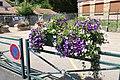 Pots de fleurs devant l'école élémentaire du Petit Muce de Forges-les-Bains le 15 juillet 2016 - 1.jpg
