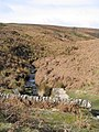 Pott Moor - geograph.org.uk - 153312.jpg