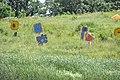 Prairie Meadow (6124372738).jpg