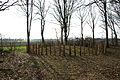 Prehistorische grafheuvels bij Toterfout - Halve Mijl 16.JPG