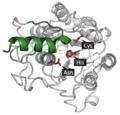 Pro-legumain active site.png