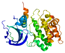 Protein TPX2 PDB 1ol5.png