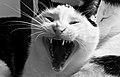 Psycho Cat (7365703476).jpg