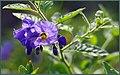 Purple Winter Wildflowers (200245143).jpeg