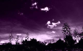 violett dröm
