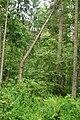 Puszcza białowieska fragmenty rezerwatu ścisłego a10.JPG