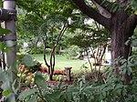 Queens Botanical Gardens.jpg