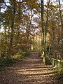 Queenswood Country Park - geograph.org.uk - 621537.jpg