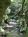 Río Lérez (Pontevedra, Galicia, España) 04.JPG