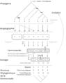 Rôle de la phylogénie dans la détermination de la niche écologique.png
