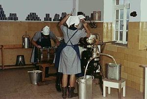 Reifenstein schools - Reifensteiner students 1985 in Wittgenstein dairy