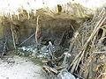 Reconstitution grotte.JPG