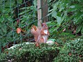 Red squirrel - geograph.org.uk - 654786.jpg