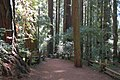 Redwood Forest (2447761737).jpg