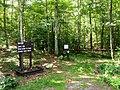 Rehoboth State Forest, Massachusetts-2.jpg