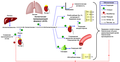 Renin-angiotensin-aldosterone system rus.png