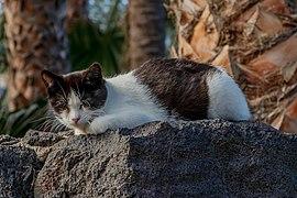 Resting Cat - Los Cancajos 01.jpg