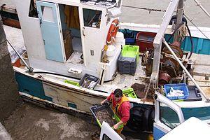Retour de la pêche du chalutier L' Entracte II (7).JPG