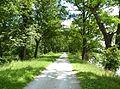 Rožmberk, památné stromořadí okolo hráze (9).JPG