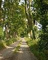 Road from Bath Farm to Dark Lane - geograph.org.uk - 1385943.jpg