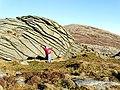 Rock Hugger - geograph.org.uk - 1100621.jpg