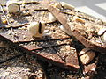 Rocky Road Bark (2).jpg