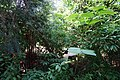 Rosine Smith Sammons Butterfly House & Insectarium August 2016 13.jpg