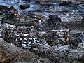 Ruined Fort 2013 7 - panoramio.jpg