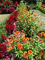Rutgers Gardens photos of plants and foliage 10.jpg