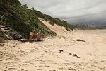SOS. Save our sand 150226-M-QA266-001.jpg