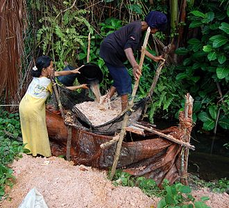 Simeulue - Washing the pith of sago palm (Metroxylon sagu); Simeulue