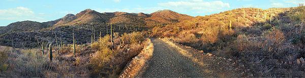 Panorama, Saguaro National Park