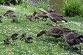 Sandringham 23-05-2011 (5761324860).jpg