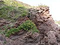 Sandstone strata, Bigbury on sea Beach - geograph.org.uk - 971688.jpg