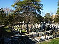 Sassari - Il cimitero (2).jpg