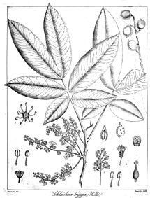 the herbarium handbook pdf