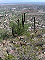 Scottsdale cityscape3.JPG