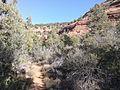 Secret Canyon Trail, Sedona, Arizona - panoramio (11).jpg