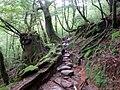 Shiratani Unsuikyo Natural Forest (31514133624).jpg