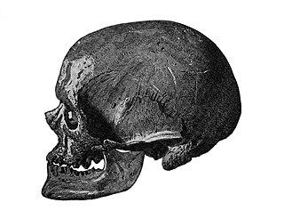 Early European modern humans Earliest anatomically modern humans in Europe