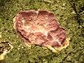 Silverleaf Fungus (34746319405).jpg
