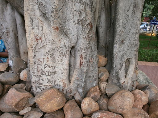 Sivan-Park-Nizhal-Tree-Walk-Writing-on-Trees-Banyan-Tree