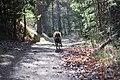 Skogssjön 03.jpg