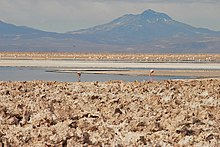 A lake with flamingos in the middle; in the background a ridge and a flat conical mountain