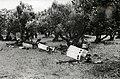 Soldaten rusten uit in boomgaard (2948560797).jpg