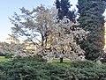 Spring in Bucharest.jpg